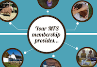 See how your 2015 MFS membership gift will make a direct impact for animals, now and in the future.